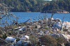 isola di incastramento del cormorano fotografia stock libera da diritti