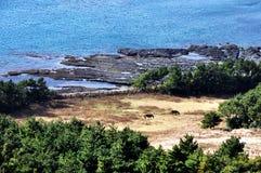 Isola di Jeju Immagine Stock