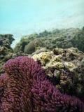 Isola di Kiriwina, Papuasia Nuova Guinea fotografia stock libera da diritti