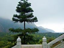Isola di Lantau del pino Fotografie Stock Libere da Diritti