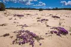 Isola di Olkhon, il lago Baikal Immagine Stock Libera da Diritti