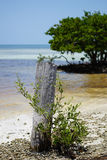 Isola di paradiso nelle chiavi di Florida Immagini Stock