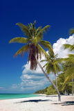 Palms and sunshine, Saona Island, Dominican Republic Stock Image