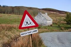 Isola di Skye Landscape. Segno dell'avviso dell'agnello fotografia stock libera da diritti