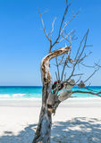 Isola di Tachai Fotografia Stock Libera da Diritti