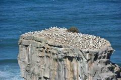 Isola di uccelli Fotografie Stock