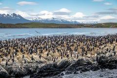Isola di uccelli del mare dei cormorani - Manica del cane da lepre, Ushuaia, Argentina Fotografia Stock Libera da Diritti