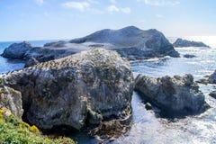 Isola di uccelli, Lobos del punto fotografie stock