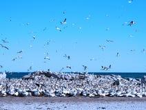 Isola di uccello Immagine Stock