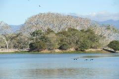 Isola di uccello sul lago di Suchitlan vicino a Suchitoto Fotografie Stock Libere da Diritti