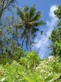 Isola di Ulong Fotografia Stock