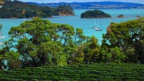 Isola di Waiheke immagini stock
