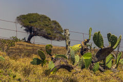 Isola Hawai della costa di Kolhala grande Fotografie Stock Libere da Diritti