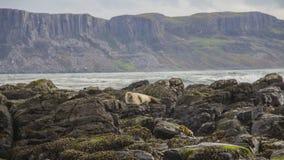 Isola Irlanda del Nord di Rathlin Fotografie Stock Libere da Diritti