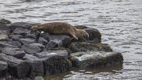 Isola Irlanda del Nord di Rathlin Fotografia Stock