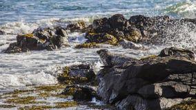 Isola Irlanda del Nord di Rathlin Immagine Stock Libera da Diritti