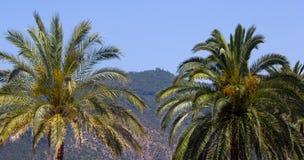 Isola mediterranea contenuta fotographia Corsica Immagine Stock