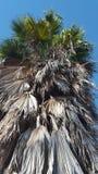 Isola mediterranea contenuta fotographia Corsica Immagine Stock Libera da Diritti