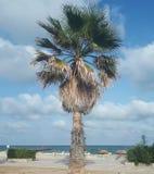Isola mediterranea contenuta fotographia Corsica Fotografia Stock
