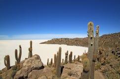 Isola negli appartamenti del sale di Uyuni, Bolivia del pesce fotografie stock libere da diritti