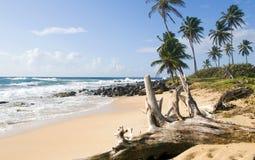 Isola non sviluppata del cereale della spiaggia Immagine Stock Libera da Diritti