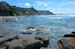 Isola Nuova Zelanda della capra Fotografia Stock Libera da Diritti