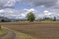 Isola Oregon di Sauvie degli spruzzatori e del terreno coltivabile Fotografie Stock