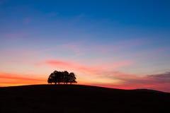 Isola in pieno degli alberi nel campo medio Fotografia Stock