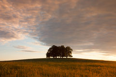Isola in pieno degli alberi nel campo medio Fotografie Stock