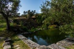 Isola Polvese: Wodne leluje Jeziorne Zdjęcie Royalty Free