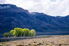 Isola residenziale con gli alberi nel mezzo delle montagne rocciose fotografie stock