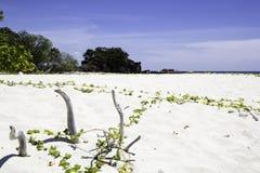 Isola Tailandia di Lipe della sabbia e del mare Immagine Stock Libera da Diritti