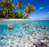 Isola tropicale Fotografie Stock Libere da Diritti