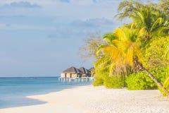 Isola tropicale con i bungalow dell'acqua Tempo soleggiato, palme e mare blu Concetto del paesaggio di calma e di libertà immagini stock libere da diritti