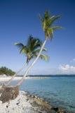 Isola tropicale della palma Fotografia Stock