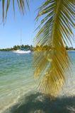 Isola tropicale nel Brasile Immagini Stock