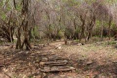 Isola tropicale viaggio immagine stock libera da diritti