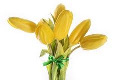 isolado amarelo de 7 tulipas Imagens de Stock Royalty Free