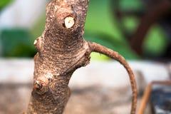 Isolado da árvore no blackground no sumer sping, vista dianteira fotografia de stock