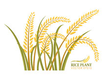 Isolado da planta de arroz no projeto branco do vetor do fundo ilustração do vetor