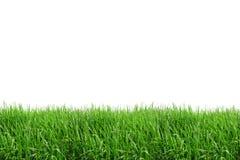 Isolado do campo de grama Imagem de Stock Royalty Free