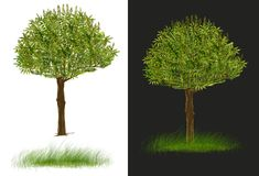 Isolado do projeto de 2 árvores branco e escuro - o cinza tem trajetos de grampeamento Fotos de Stock