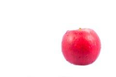 Isolado vermelho da maçã imagem de stock royalty free