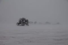 Isolamento com a árvore no blizzard à terra Imagens de Stock Royalty Free