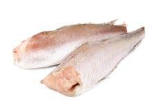 Isolamento congelato del nasello del pesce su fondo bianco Fotografia Stock
