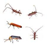 Isolamento dello scarabeo immagini stock