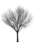 Isolamento nudo della siluetta dell'albero fotografie stock