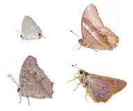 Isolamento selvagem das borboletas Imagens de Stock