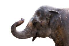 isolat d'éléphant Photos stock