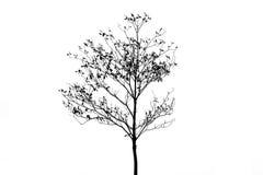 Isolat d'arbres à feuilles caduques de silhouette sur le fond blanc Photo stock